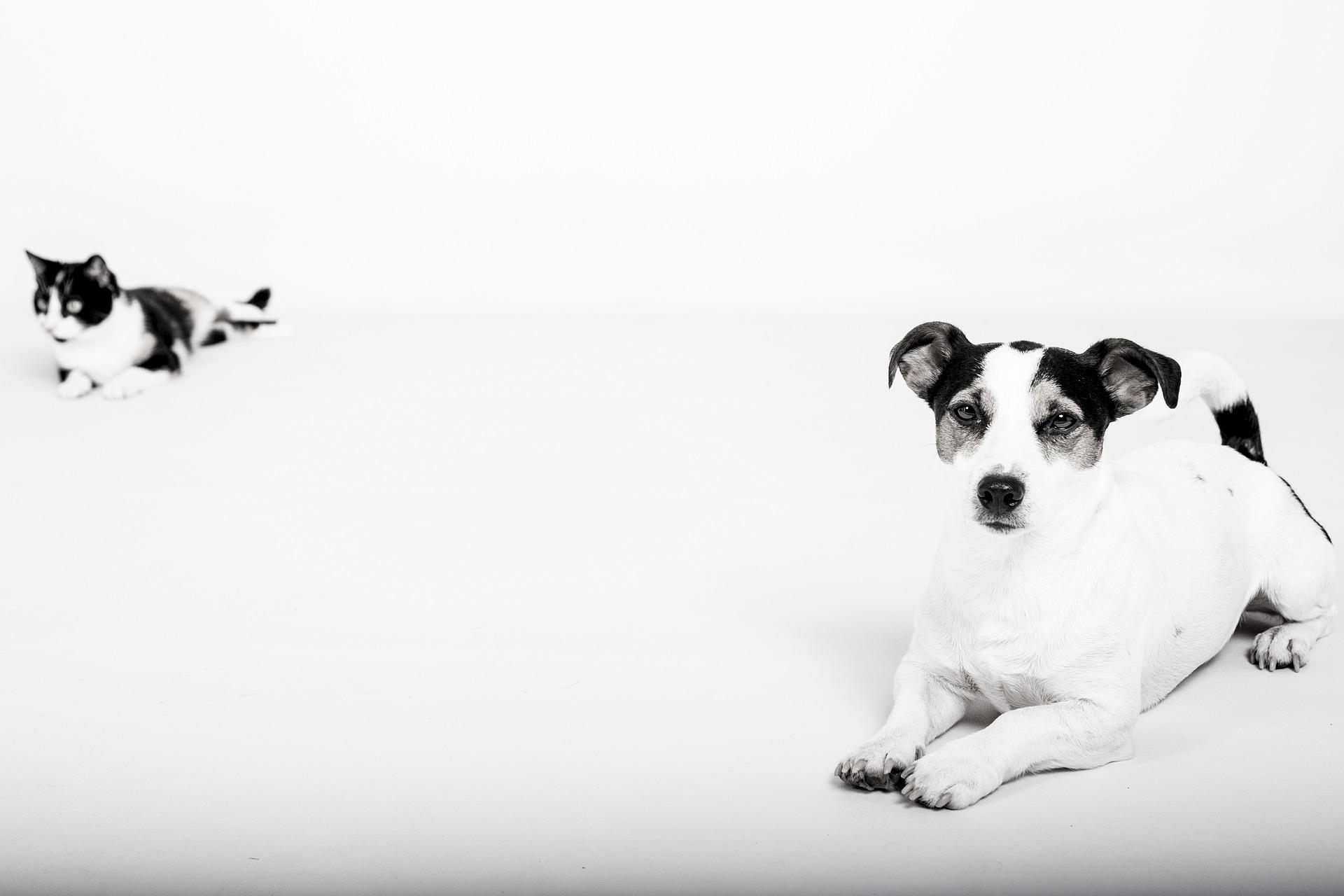 犬や猫の瞬膜が出てる、瞬膜異常(突出)の特徴