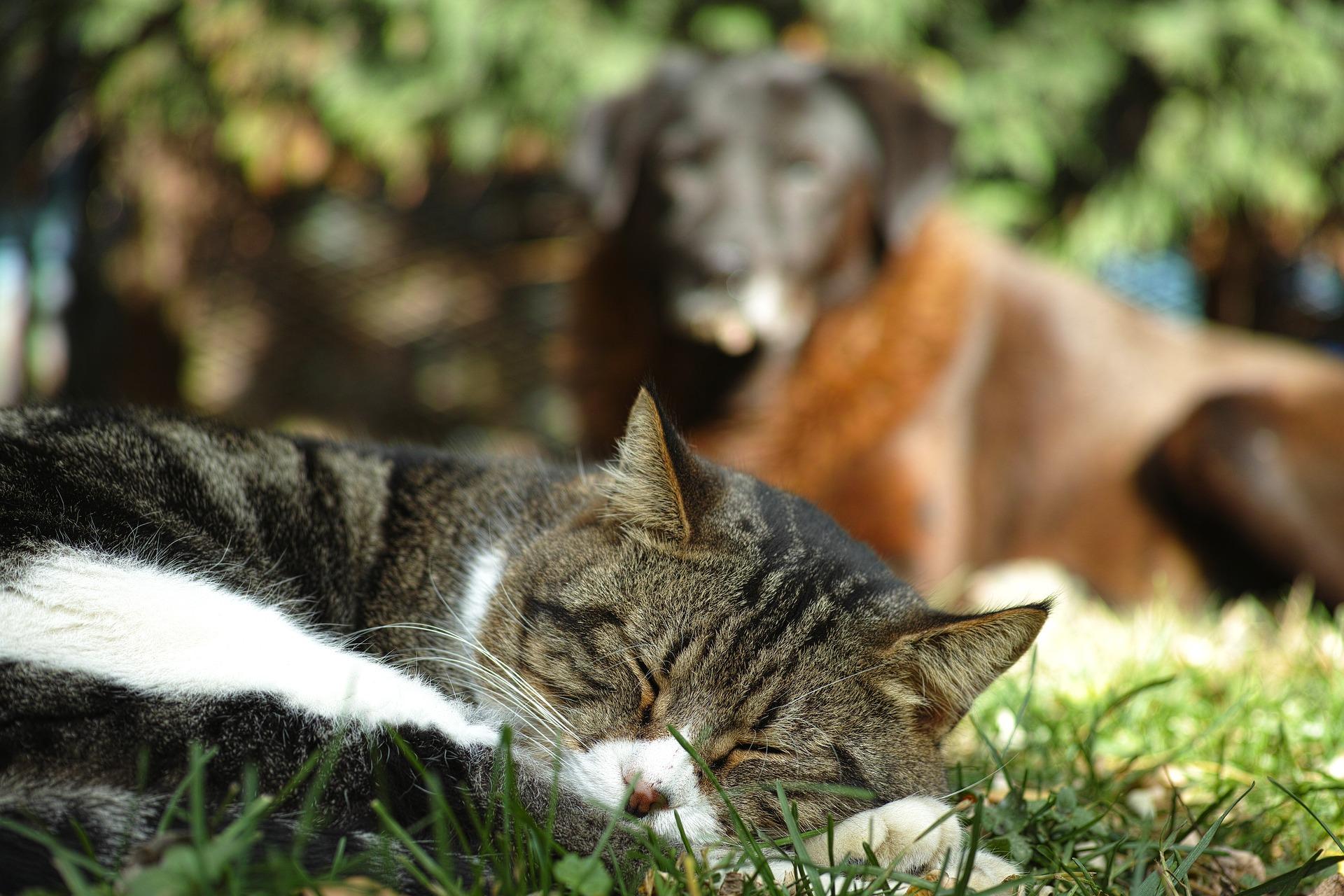 犬や猫が斜視になった!目が斜め、目の傾きの高頻度の疾患