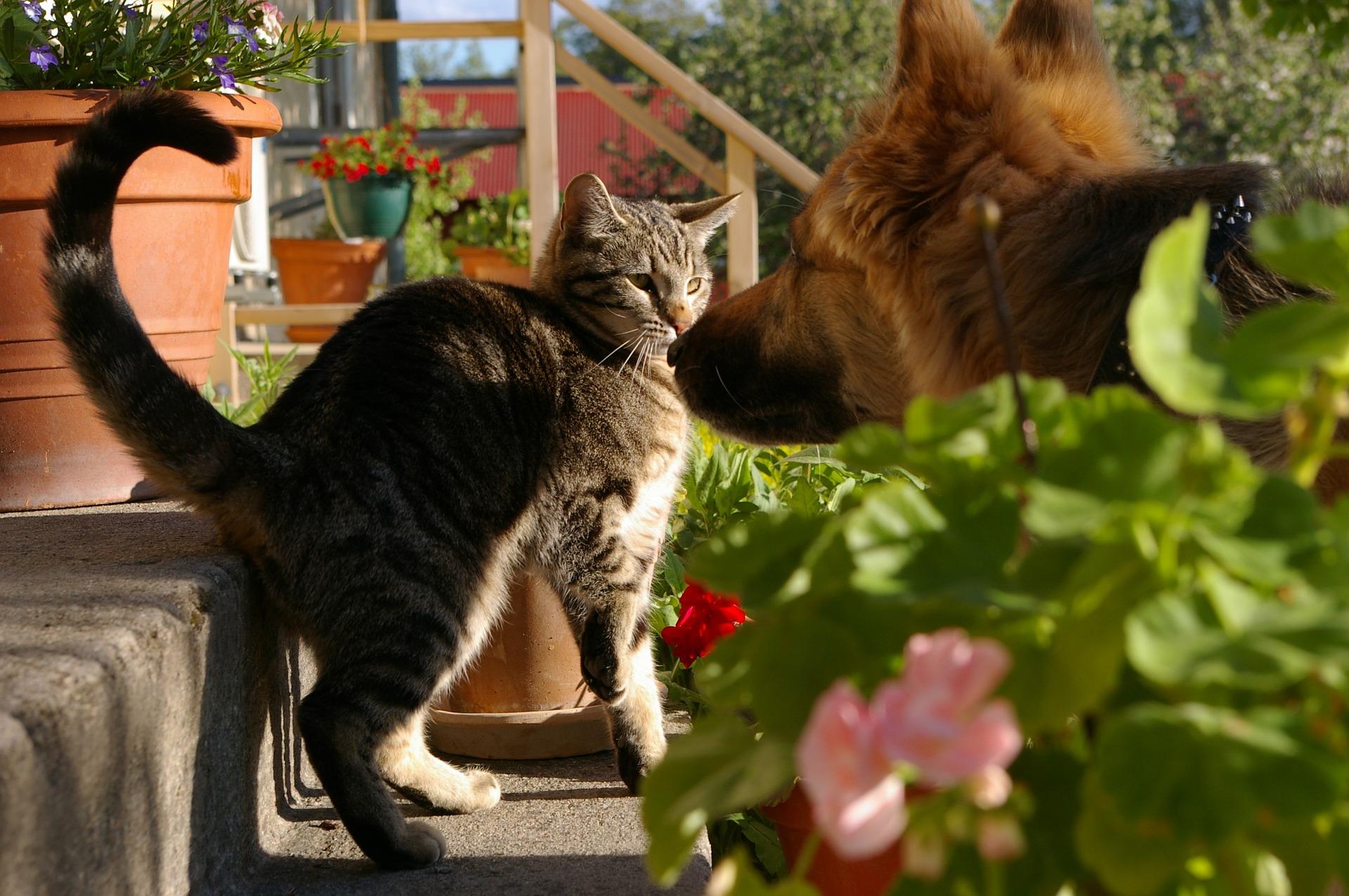 犬や猫の目が赤い!目が充血している!結膜の異常(充血)の診断の進め方