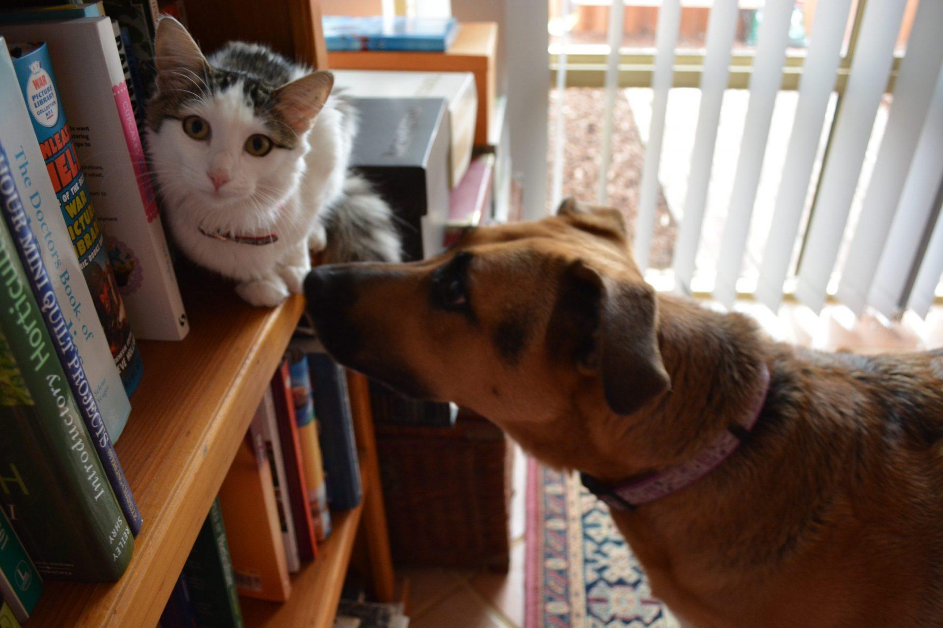 犬と猫の体のしびれ、感覚がない?麻痺の定義
