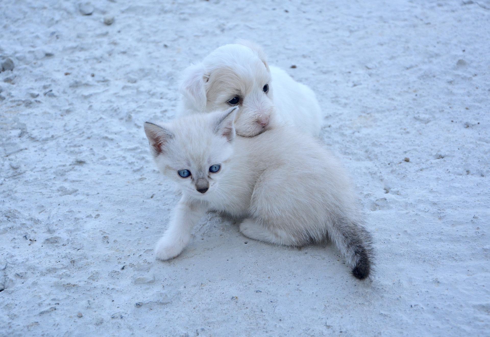 犬や猫が斜視になった!目が斜め、目の傾きとは?