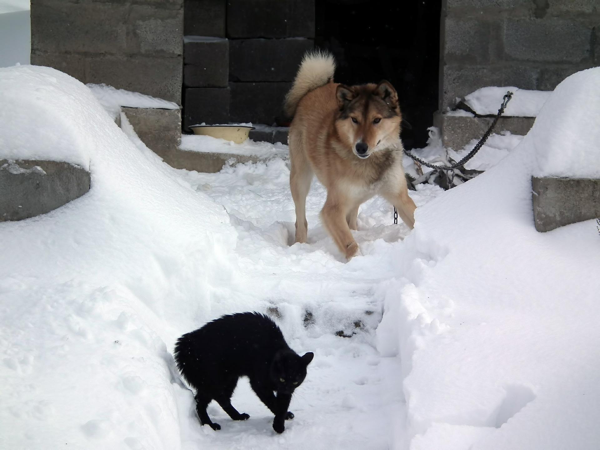 犬と猫の体のしびれ、感覚がない?麻痺の分類と問題点