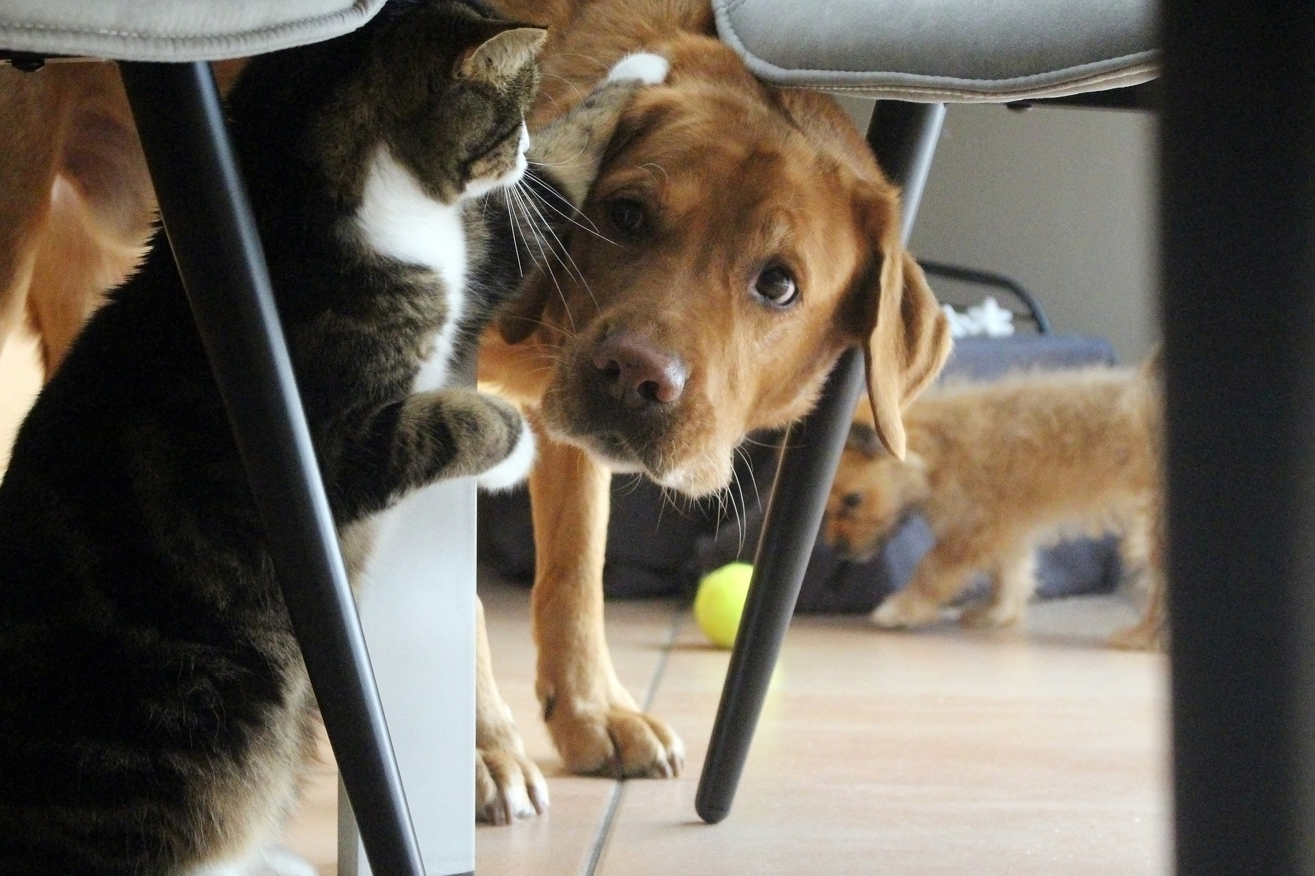 犬や猫の目が赤い!目が充血している!結膜の異常(充血)の特徴