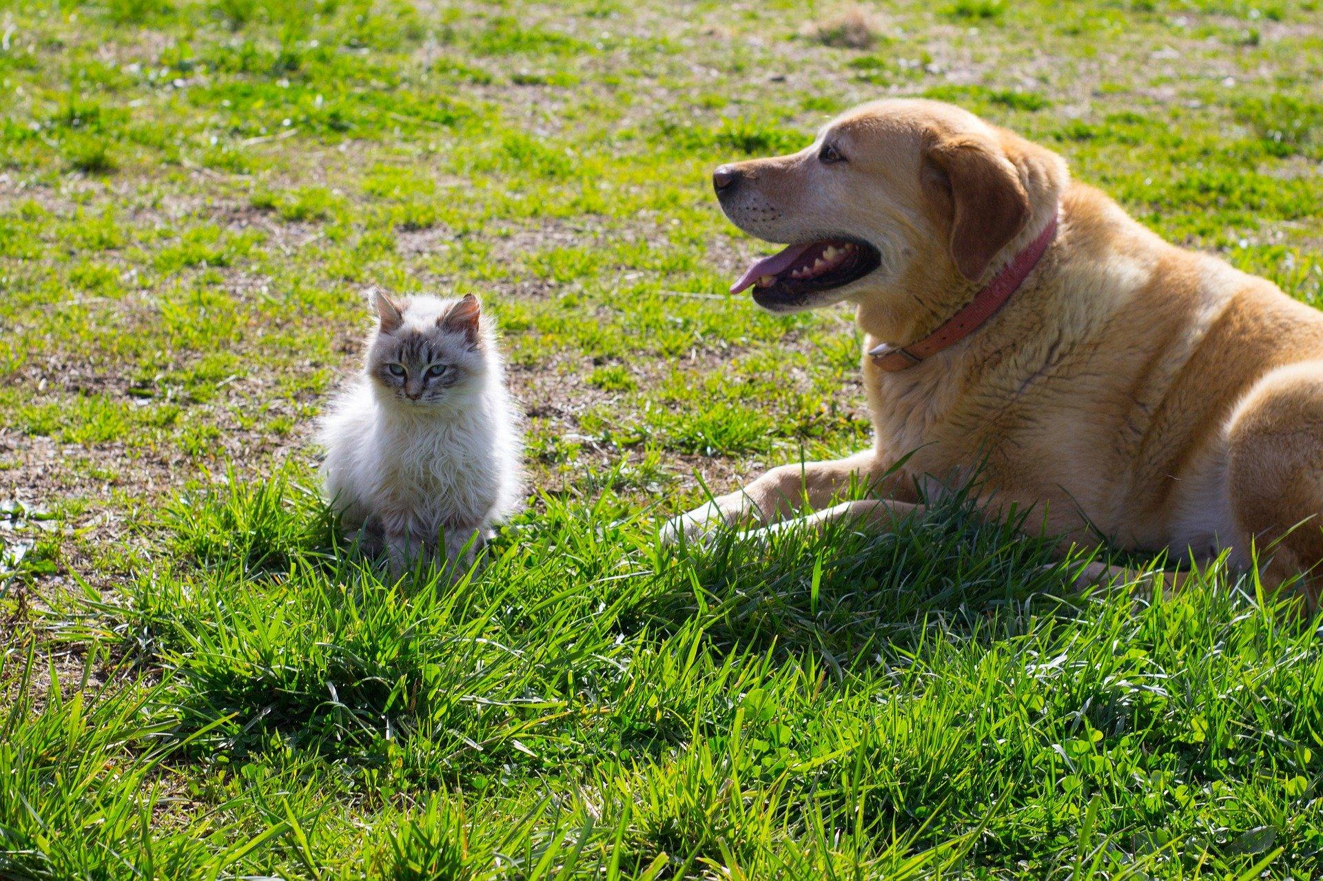 犬や猫の目が赤い!目が充血している!結膜の異常(充血)の病理発生