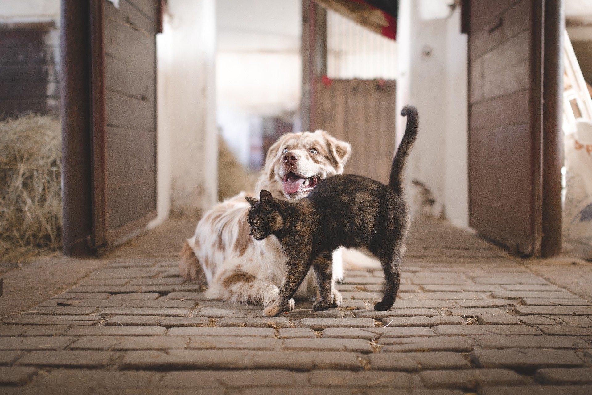 犬や猫の目が赤い!目が充血している!結膜の異常(充血)の対症療法