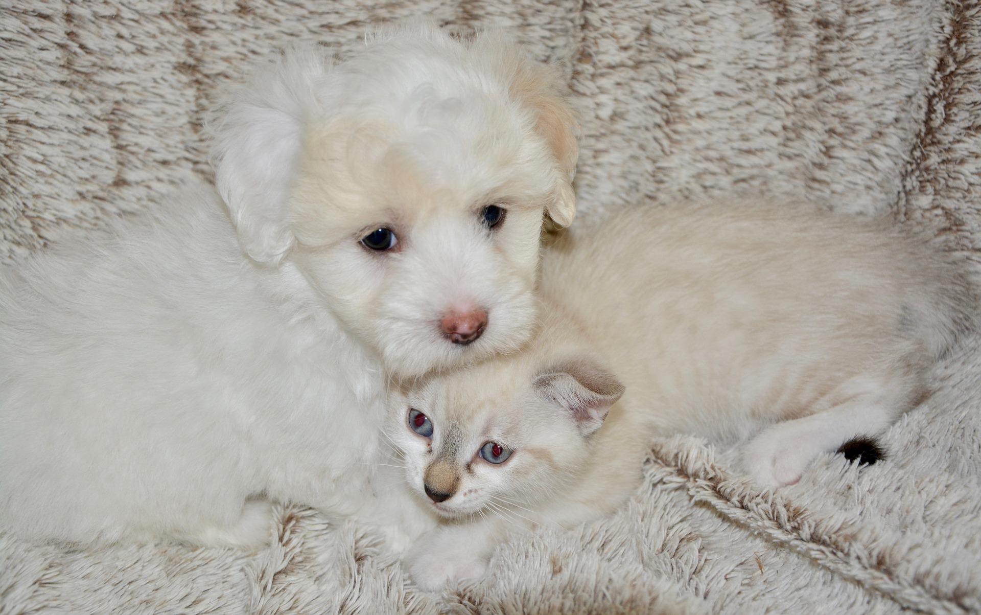 犬や猫の皮膚が赤い、黒い、かさぶた、ニキビ、湿疹、できものの特徴