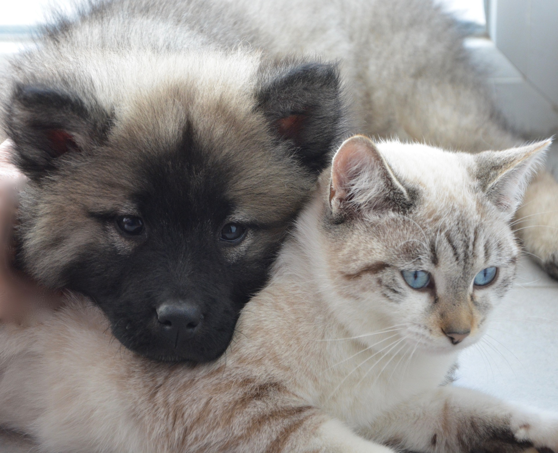 犬と猫のバイオマーカーとは