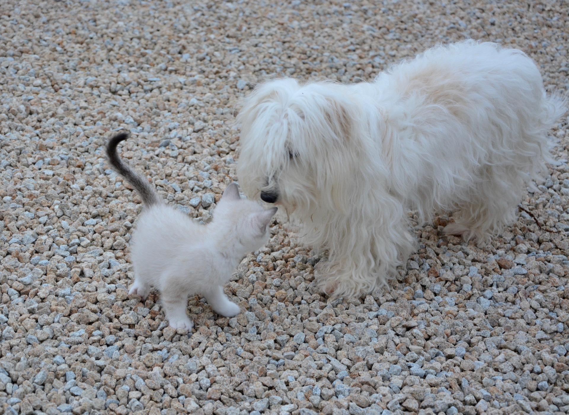 犬や猫の目が赤い!目が充血している!結膜の異常(充血)のよくある病気