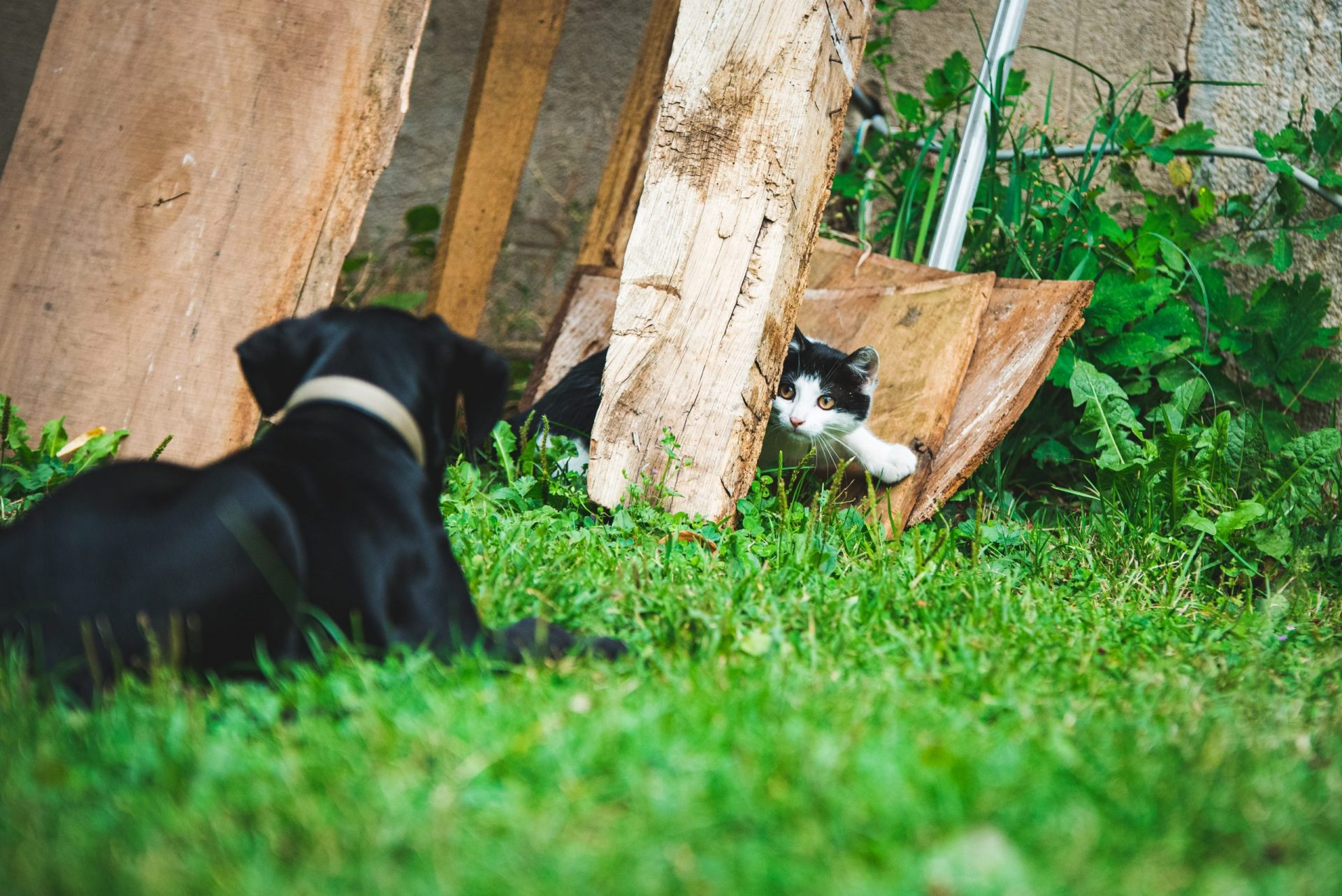 犬と猫の心臓マーカー:BNPとは?
