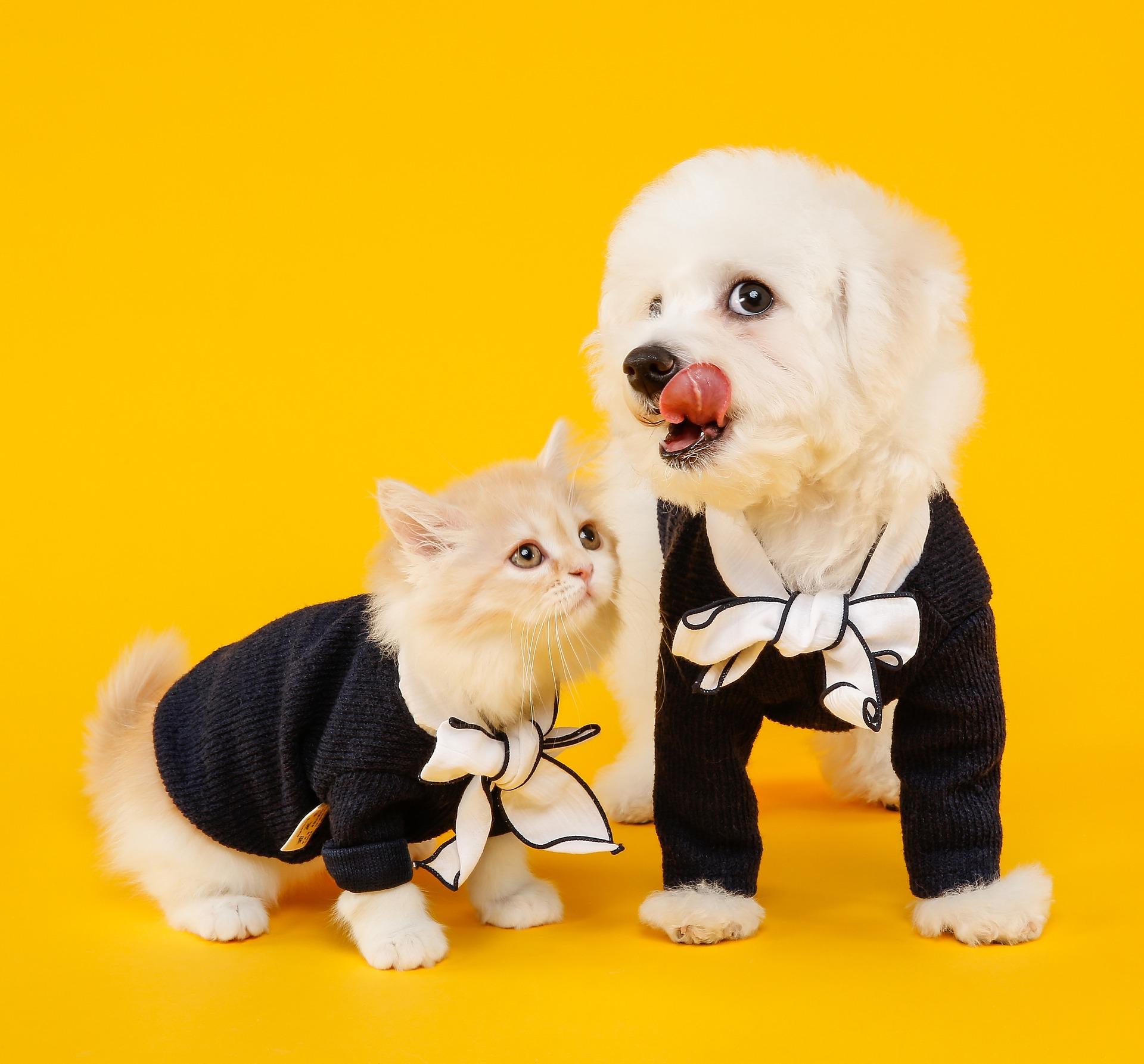 犬や猫がご飯を食べにくそう?食べづらい?食べ方がおかしいとき:咀嚼障害の診断の進め方