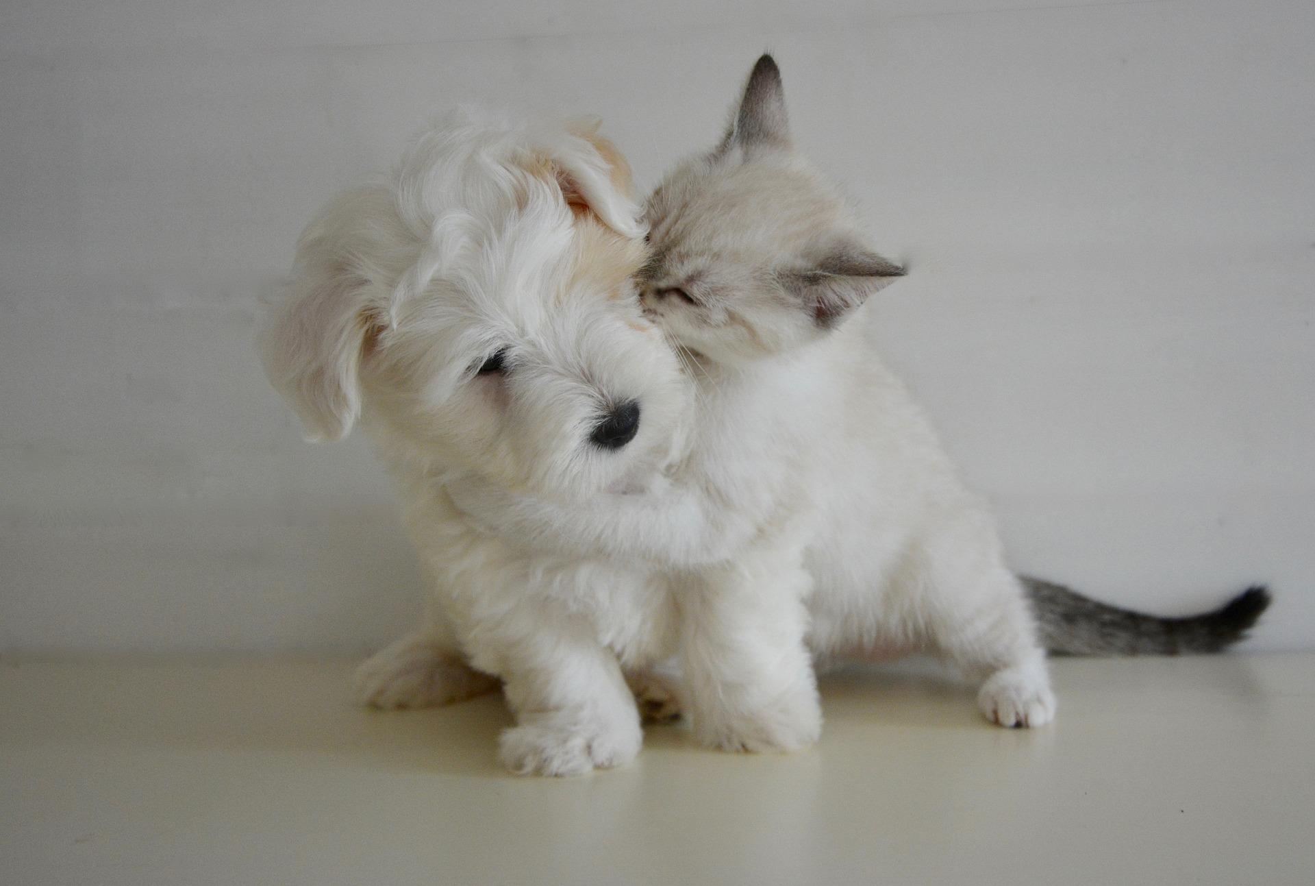 犬や猫の弓なり、背中を反らせる後弓反張の診断の進め方