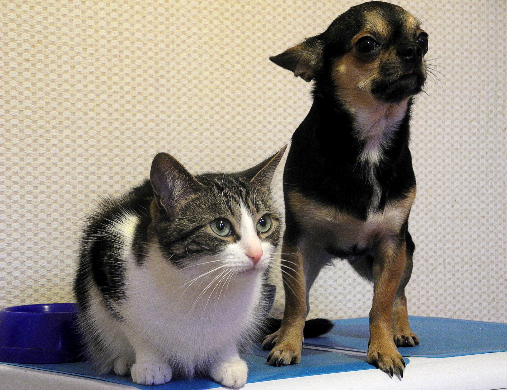 犬や猫の目が赤い!目が充血している!結膜の異常(充血)の分類と問題点