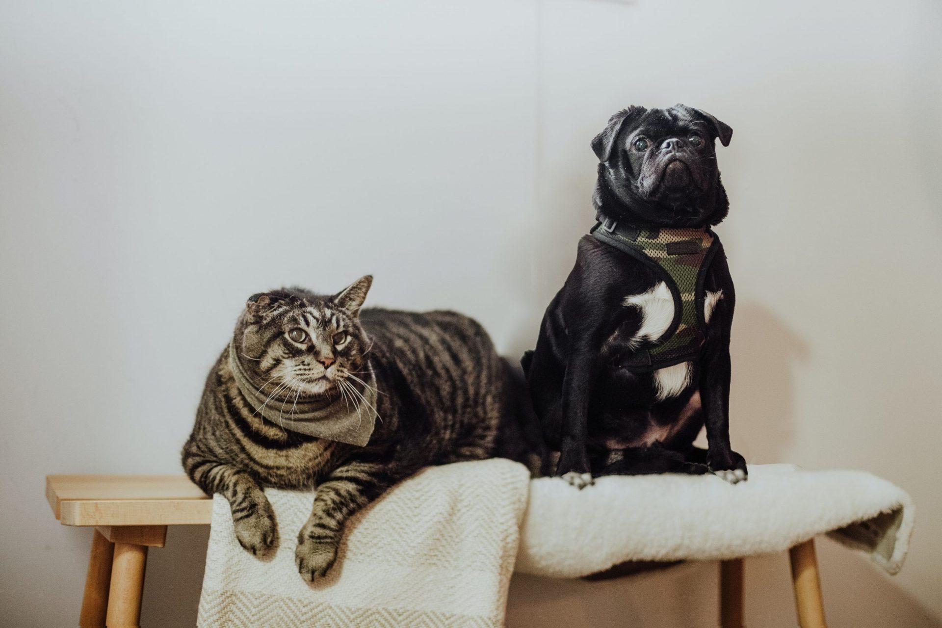犬や猫の目が赤い!目が充血している!結膜の異常(充血)の定義