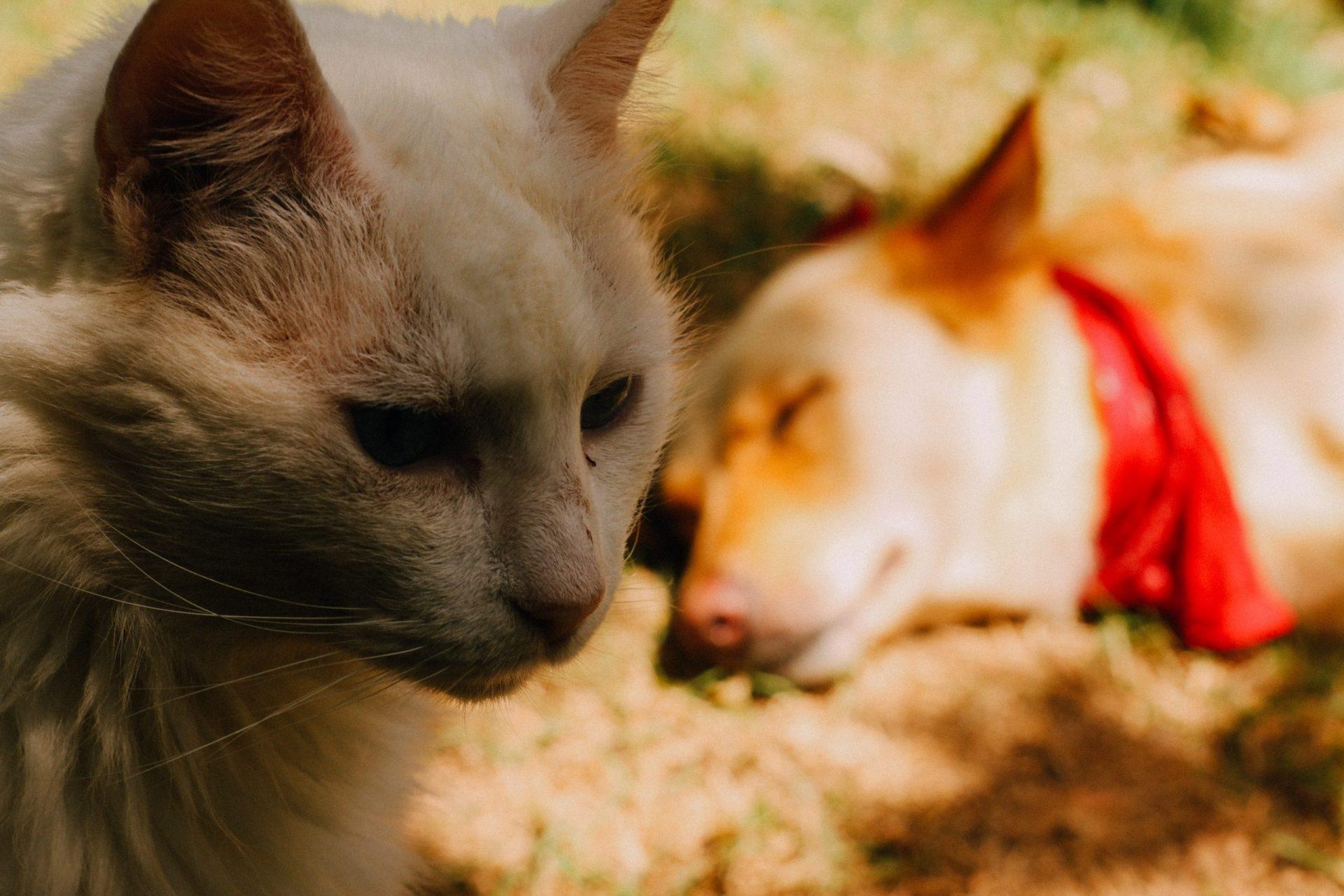 犬や猫が立てない、歩けない!起立不能、起立困難とは
