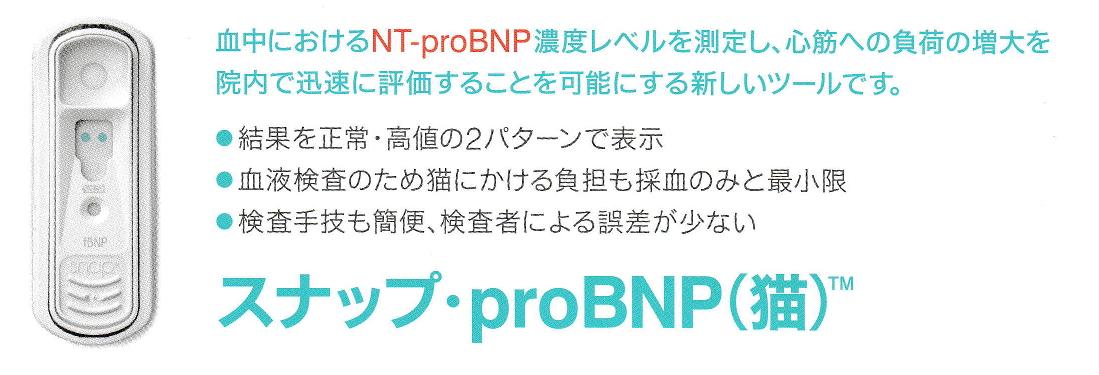 猫の心筋症の血液検査:BNPの新しい検査方法