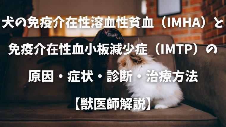 犬と猫の免疫介在性溶血性貧(IMHA)と新生子同種溶血現象の 原因・症状・診断・治療方法 【獣医師解説】